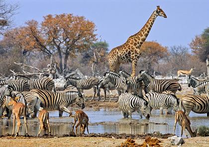 voyage et circuit moto en afrique du sud et safari